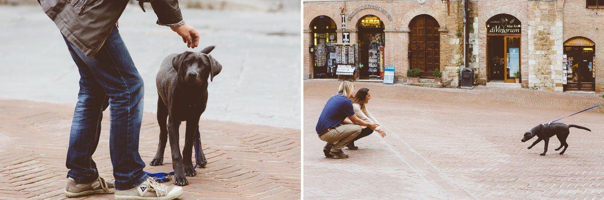 funny dog in san gimignano