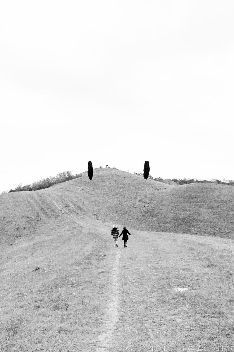 two cypresses in the hills surrounding certaldo