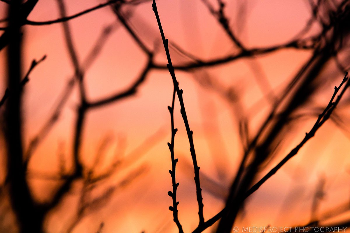 branches of a tree in a sunset light