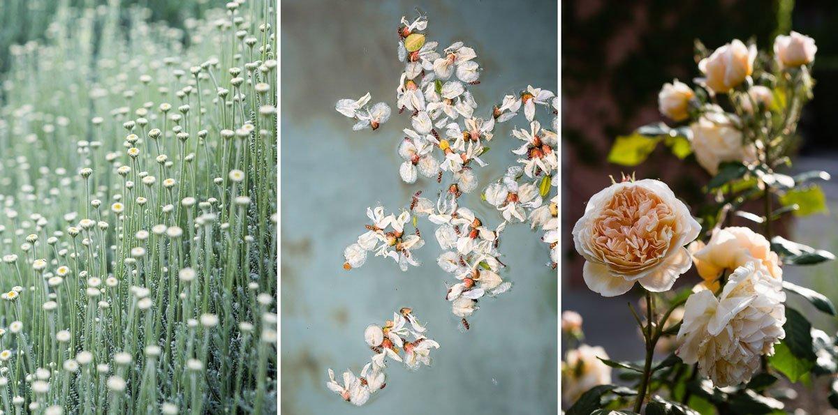 details of spring flowers