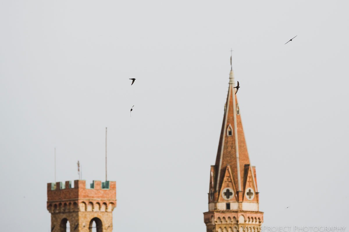 swallows in the centre of florence