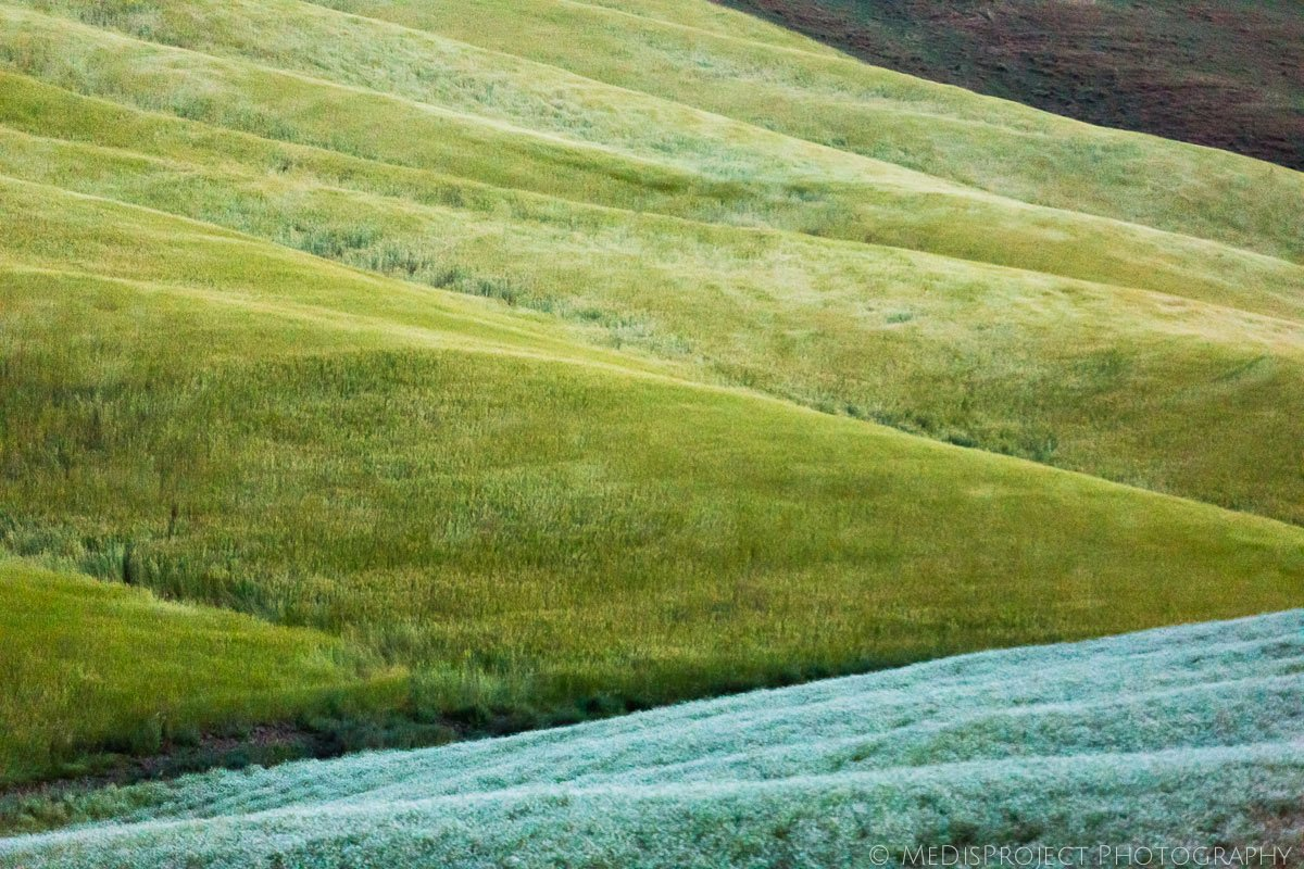 Tuscan green fields at springtime
