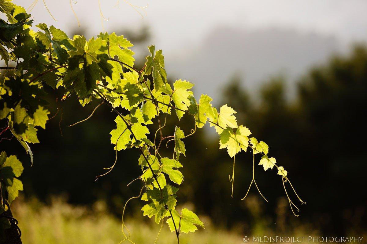 grape tree detail