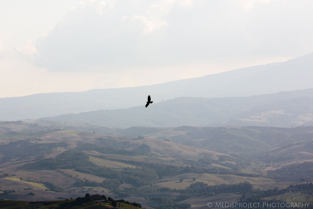 a falcon flying over the Tuscan countryside