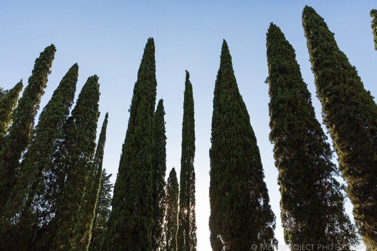 cypress trees in Villa Poggio San Felice's garden
