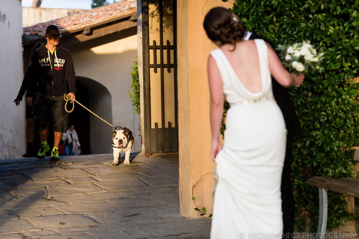 English bulldog surprise Bride and Groom during photo session in Florence