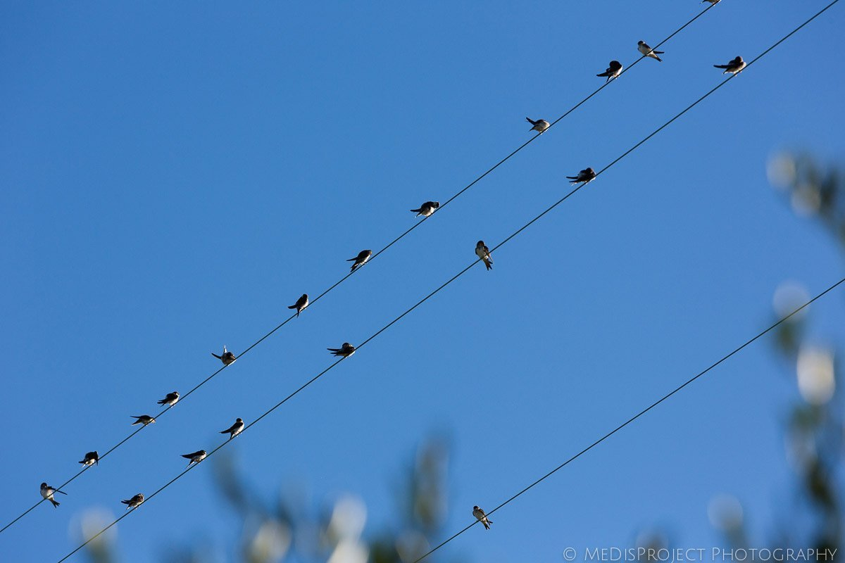 Little birds on the wires