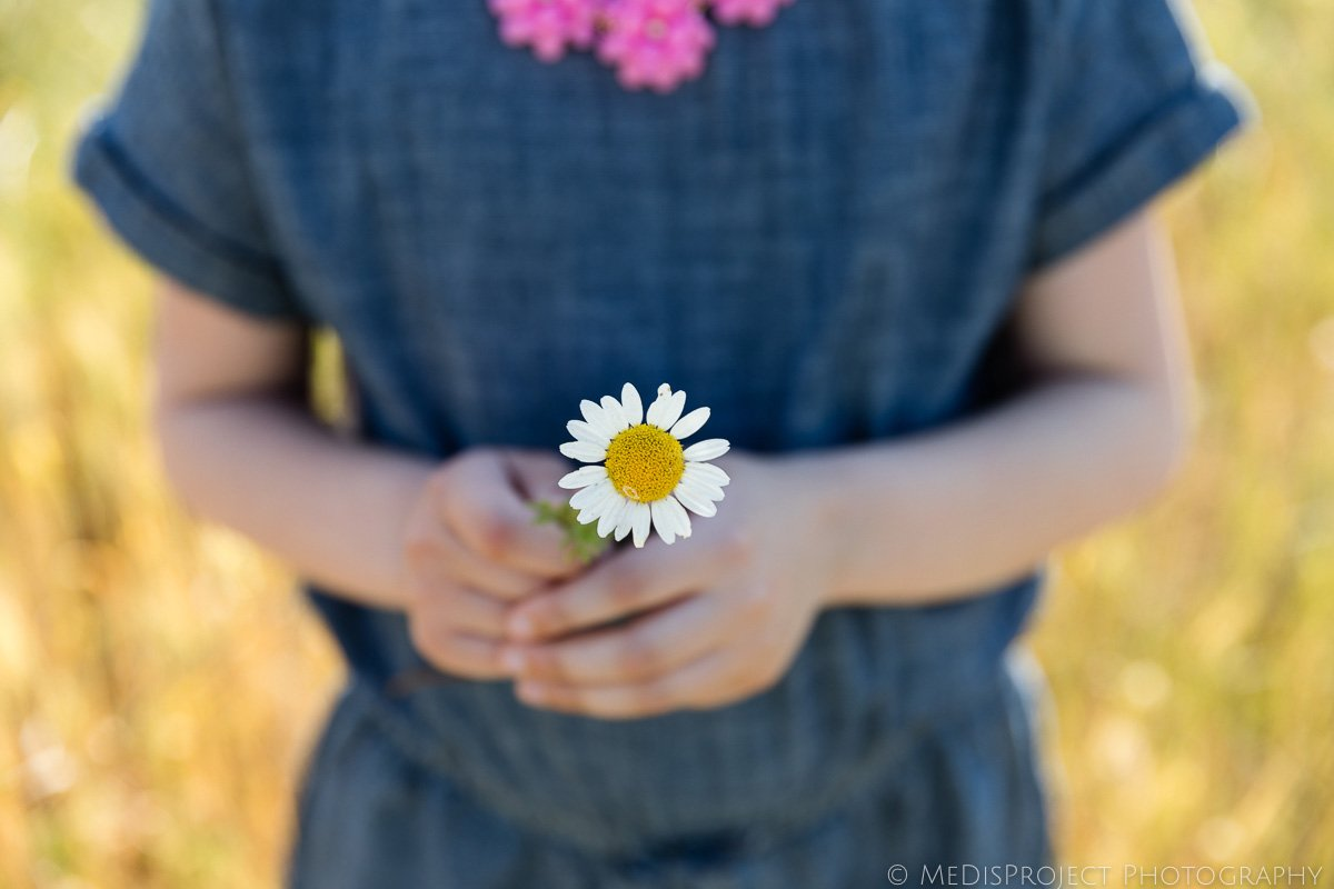 Daisy flower in little girl's hands