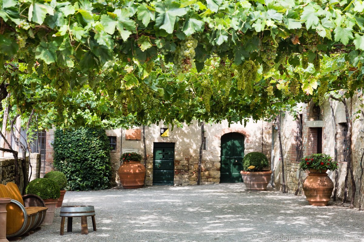 wine trees in borgo san felice tuscany