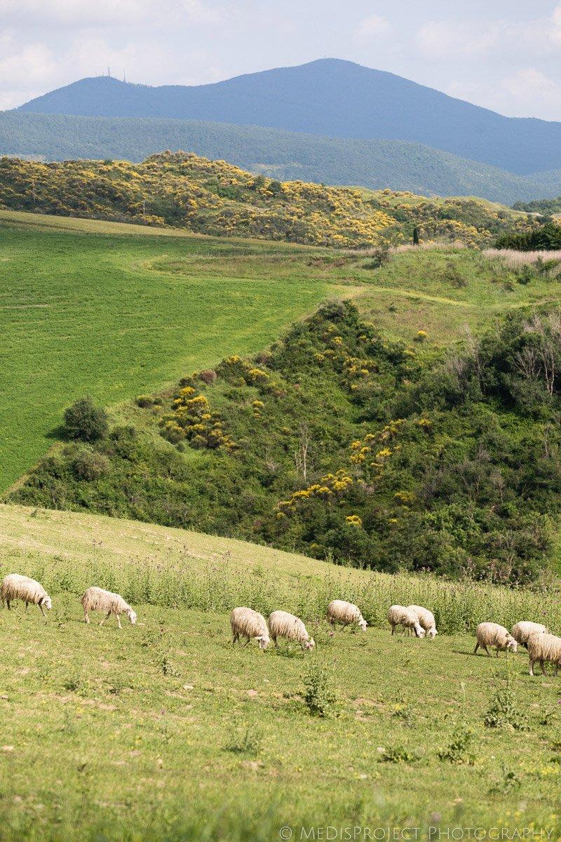 green vacation photographers Tuscany