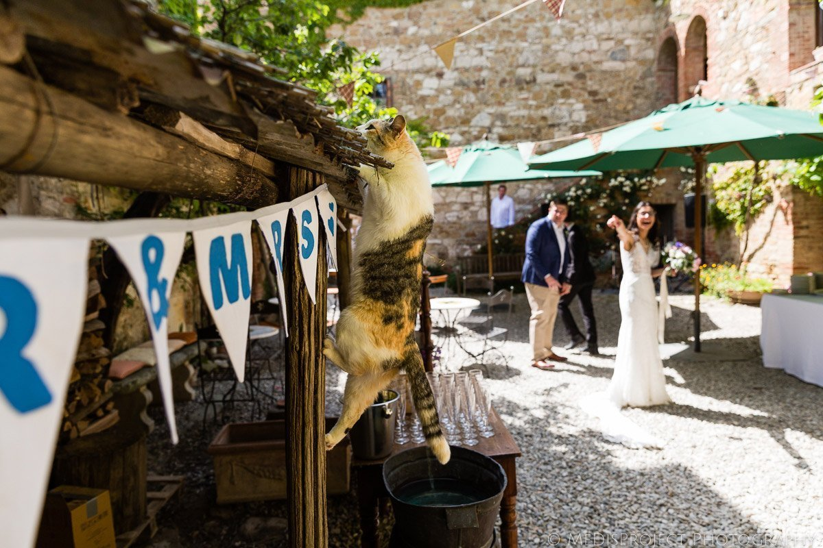 A cat surprising the just married couple at Agriturismo il Rigo