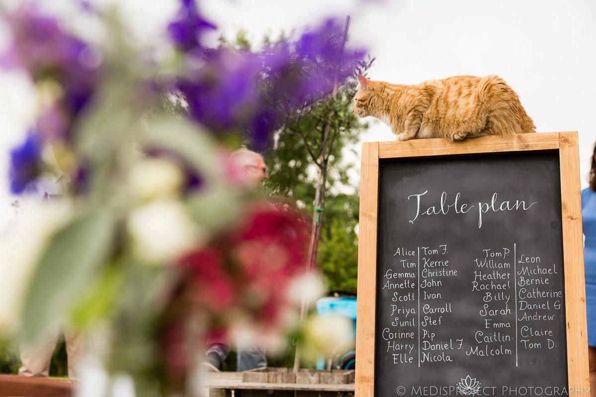 cat sitting on top of a wedding dinner tableau at il Rigo