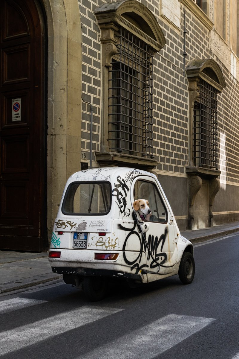 A beegle on a graffiti-decorated city car in Florence