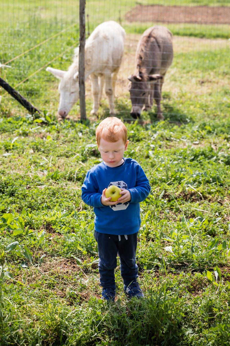 Two year old boy with an apple standing in front of two donkeys