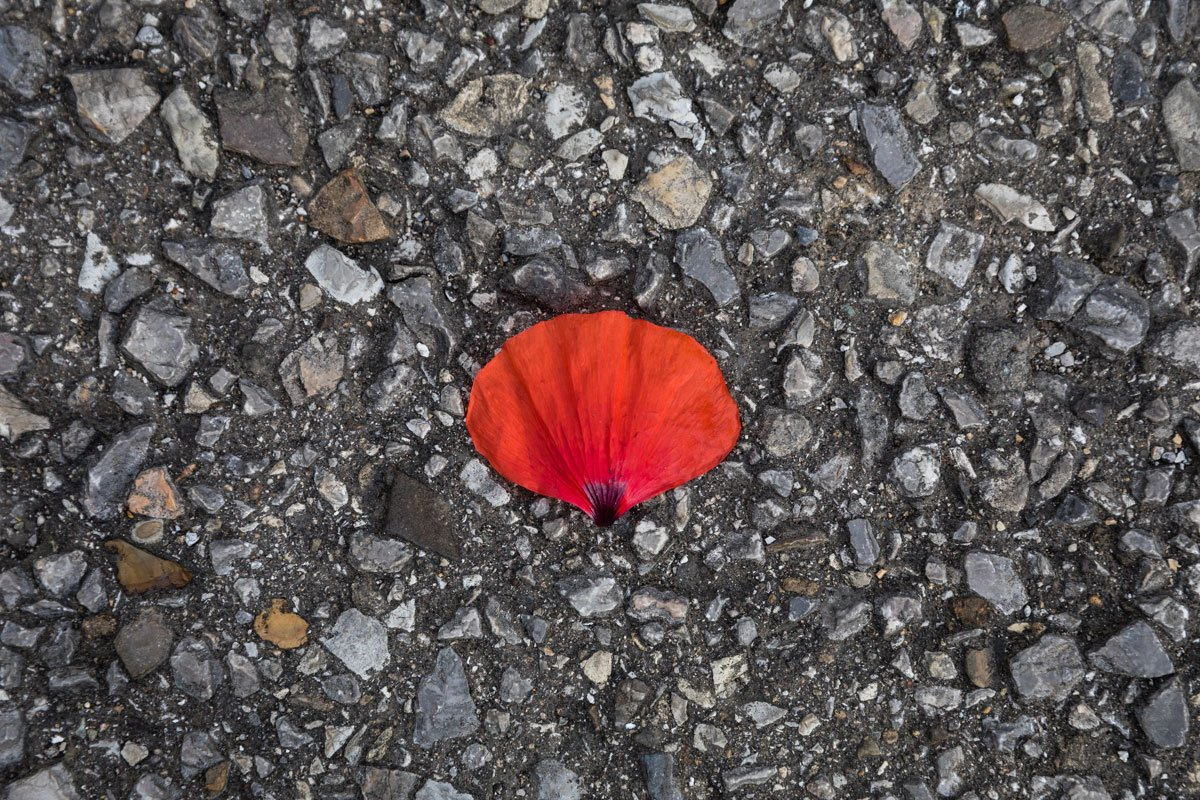 red poppy petal on tarmac