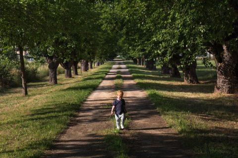 A little boy walks down a mulberry tree boulevard