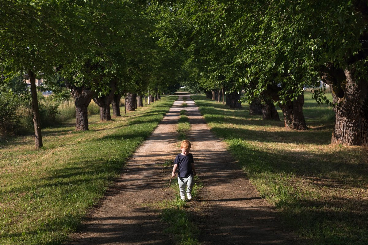 A little boy walks down a mulberry tree boulevard