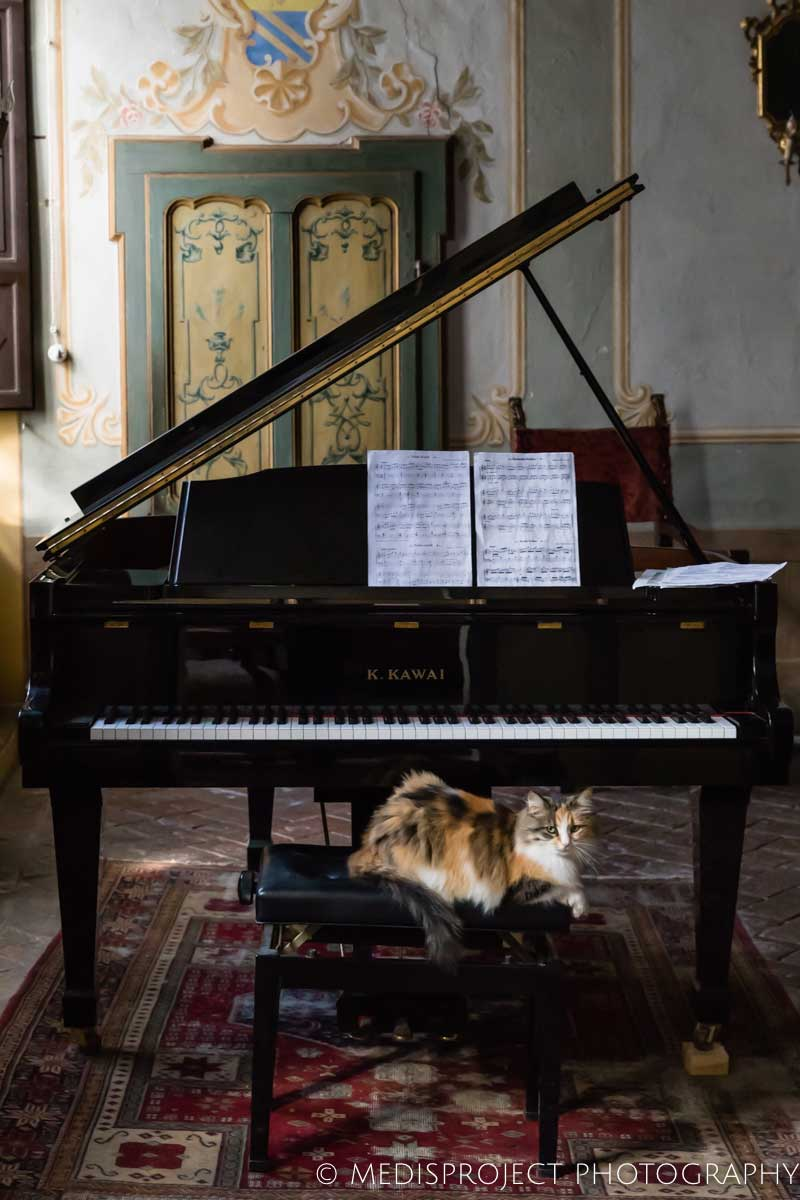 a cat sitting in front of the piano at Casa dell'Abate Naldi