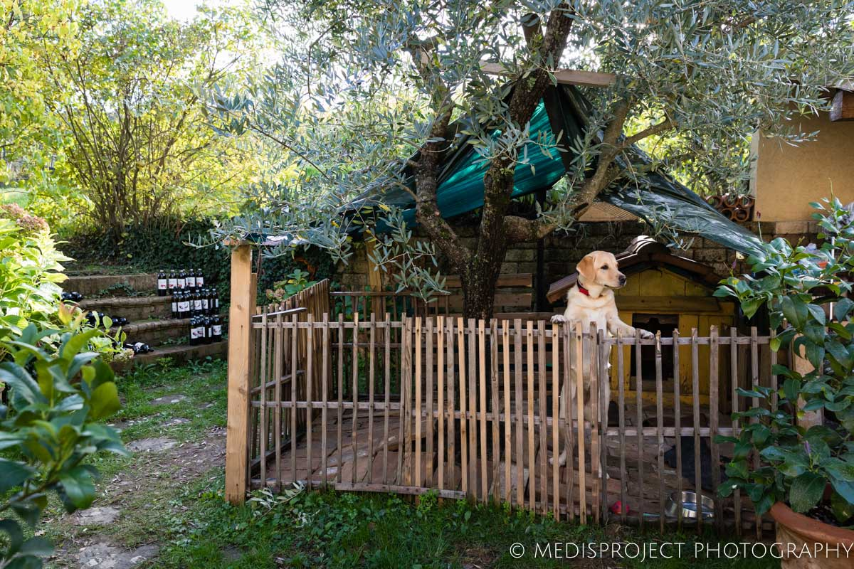 a dog in his fenced area