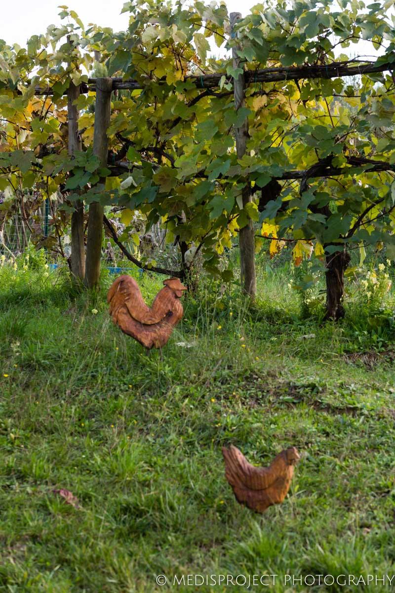 wooden hen sculptures at NostraVita's winery