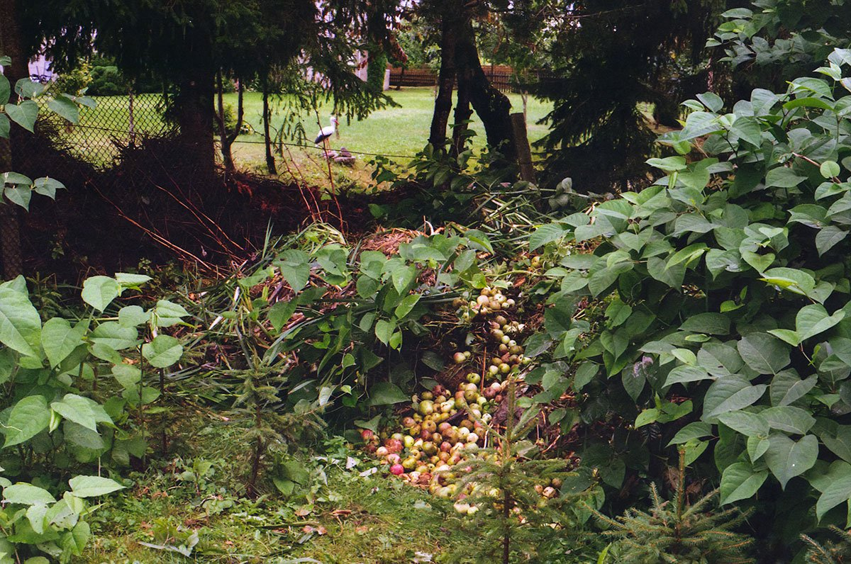 apples and vegetables composting in the garden